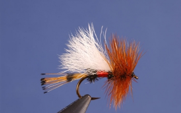 Dry Fly: Royal Coachman Trude