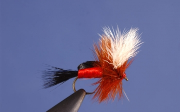 Dry Fly: Royal Humpy