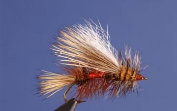 Dry Fly: Royal Stimulator