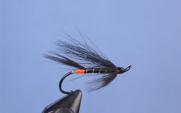 Hairwing: Blk Bear Orange Butt