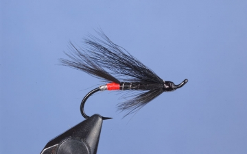 Hairwing: Black Bear Red Butt