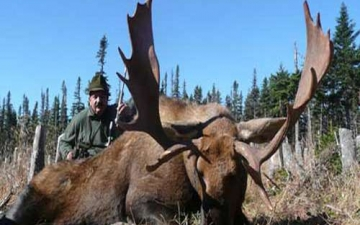 Another Big Moose